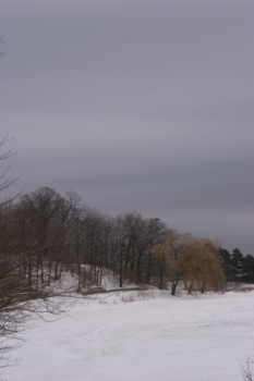 Grey skies in High Park